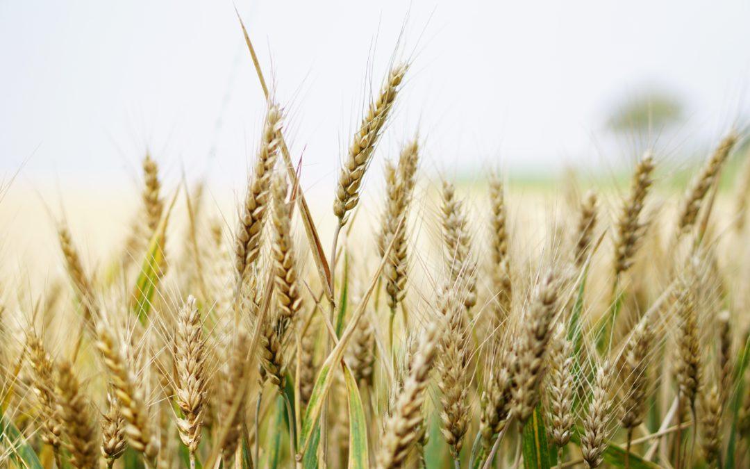Whole Grains Keep You Whole